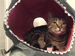 julia s. verified customer review of Great White Shark Cat Ball Cat Bed