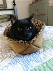 Nancy L. verified customer review of The Cat Canoe modern kitty bed made in leopard fabric