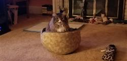 Anonymous verified customer review of Bed for Large Cats - Jumbo Cat Canoe in Flint Floral Fabric