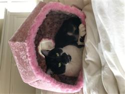 sheri faoro verified customer review of Pink Velvet Cat Ball cat bed with Grey Cat Lining
