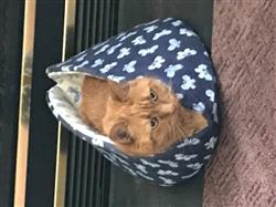 Anonymous verified customer review of Bed for Large Cats - Jumbo Cat Canoe in Navy Blue and White Butterflies Fabric