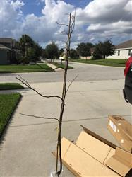 Timothy A. verified customer review of Rising Sun™ Redbud Tree