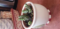 Brandy F. verified customer review of Crassula Baby Necklace