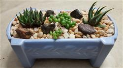 Scott H. verified customer review of 4 Succulents/ Month