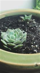 Derrick C. verified customer review of 2 Succulents/ Month
