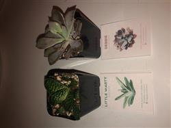 Holly C. verified customer review of 2 Succulents/ Month