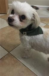 Jenny L. verified customer review of Dog Bandana