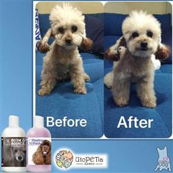 Utopetia verified customer review of Body & Bounce Dog Shampoo