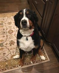 Lisa F. verified customer review of Bernese Mountain Dog Nose Butter