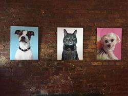 Amanda R. verified customer review of Themed Portrait: You left paw prints on my heart