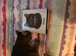 Janet B. verified customer review of Hand Drawn Portrait - 1 Cat