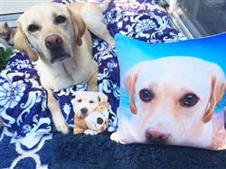 kat m. verified customer review of Personalized Pet Pillow