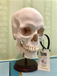 Joaquin F. verified customer review of Human Skull Display Stand