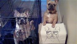 Pam B. verified customer review of Franco the French Bulldog - Tote Bag