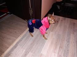 Sofia Wilkerson verified customer review of I Love Papa and I Love Mama Winter Dog Clothing For Small And Large Dogs
