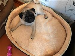 Ronan Hubbard verified customer review of Double Sided All Seasons Extra Large Dog Bed  Dog Cat Warm Fleece Bed S-XL