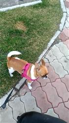 ROB K. verified customer review of Quick Fit No Pull Reflective Stitching and Padded Dog Harness