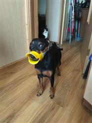 Mathias W verified customer review of Cute Duck Mouth Design Silicone  Dog Muzzle (FIVE STARS)