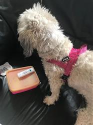 Susan L. verified customer review of Quick Fit No Pull Reflective Stitching and Padded Dog Harness