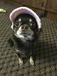 C. Smith verified customer review of Dog Baseball Cap With Ear Holes -  For Small Pets