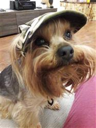 Conor Buckley verified customer review of Dog Baseball Cap With Ear Holes -  For Small Pets