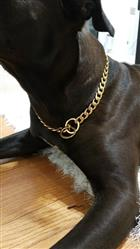 Ebony T verified customer review of 316L Stainless Steel Dog Chain Collar in Black, Silver and Gold