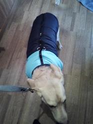 Leon S verified customer review of Padded Warm Waterproof Zip-up  Winter Dog Jacket For Medium and Large Dogs Sizes S-5XL