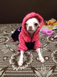 B Stark verified customer review of I Love Papa and I Love Mama Winter Dog Clothing For Small And Large Dogs