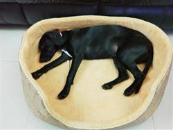 Elsa F. verified customer review of Double Sided All Seasons Extra Large Dog Bed  Dog Cat Warm Fleece Bed S-XL