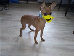 James Mitchells verified customer review of Cute Duck Mouth Design Silicone  Dog Muzzle (FIVE STARS)