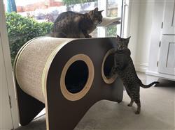 Kate verified customer review of Walli Feline Hutch & Scratcher