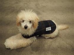 Jill L. verified customer review of Camp Dog Coat