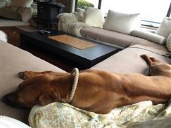 CHANTEL O. verified customer review of DOG BLANKET FLEECE SAND