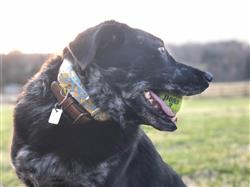 caroline l. verified customer review of Cowskulls Black Dog Collar