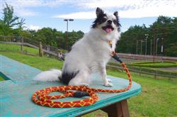 AKIRA M. verified customer review of Woven Paracord Collar