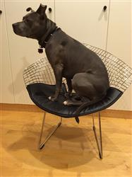 laurie d. verified customer review of Morph Lounge Chair