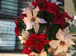 Anonymous verified customer review of Artificial Outdoor Water Resistant Poinsettia Bush in White - 15 Tall