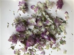 Anonymous verified customer review of Dried Kent Beauty Oregano - 2 oz Bundle - 15 Tall