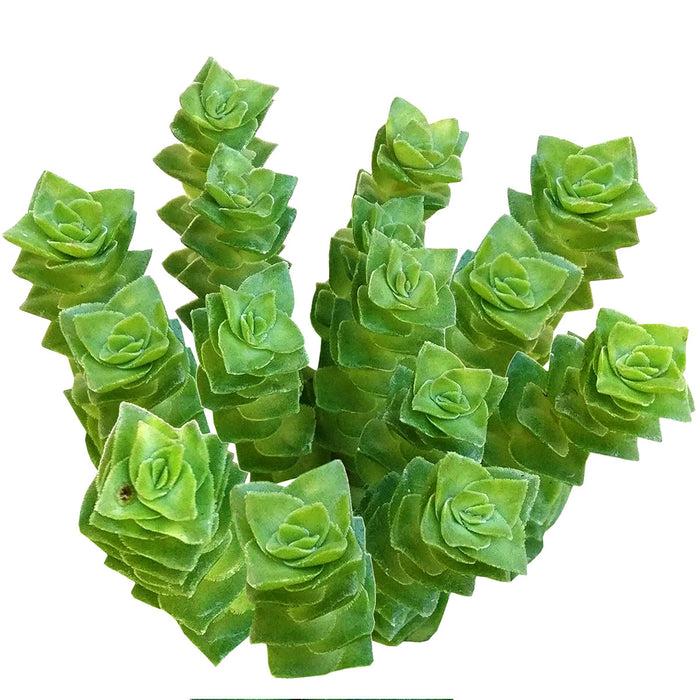 Crassula Green Pagoda