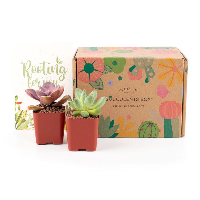 2 Succulents/ Month