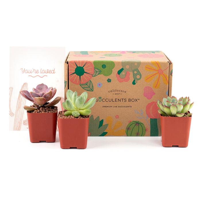 3 Succulents/ Month