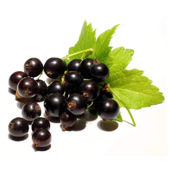 Freeze Dried Black Currant Snack Pouch