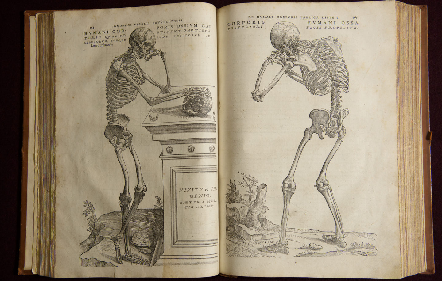11coolbooks_anatomy_1