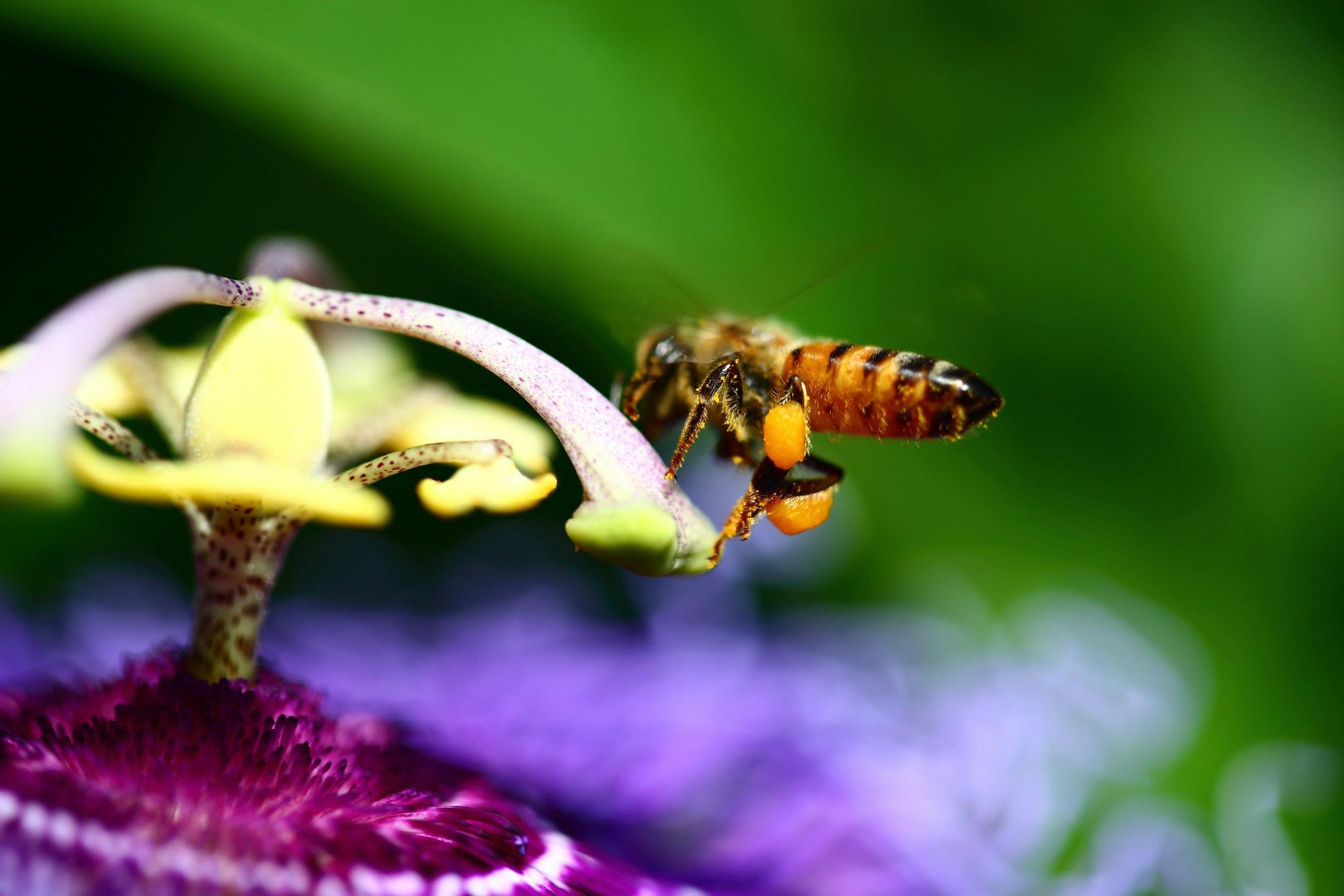 Pollen -  by D Scott Smith
