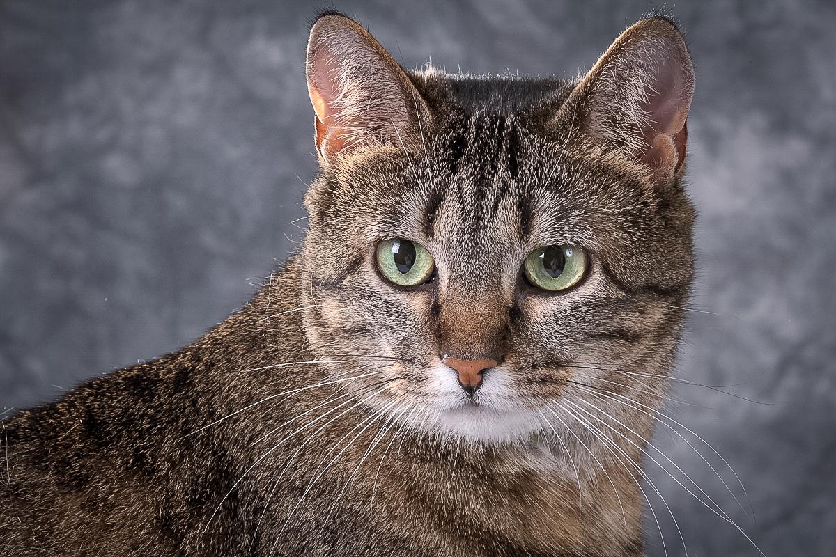 catsmug1.jpg -  by D Scott Smith