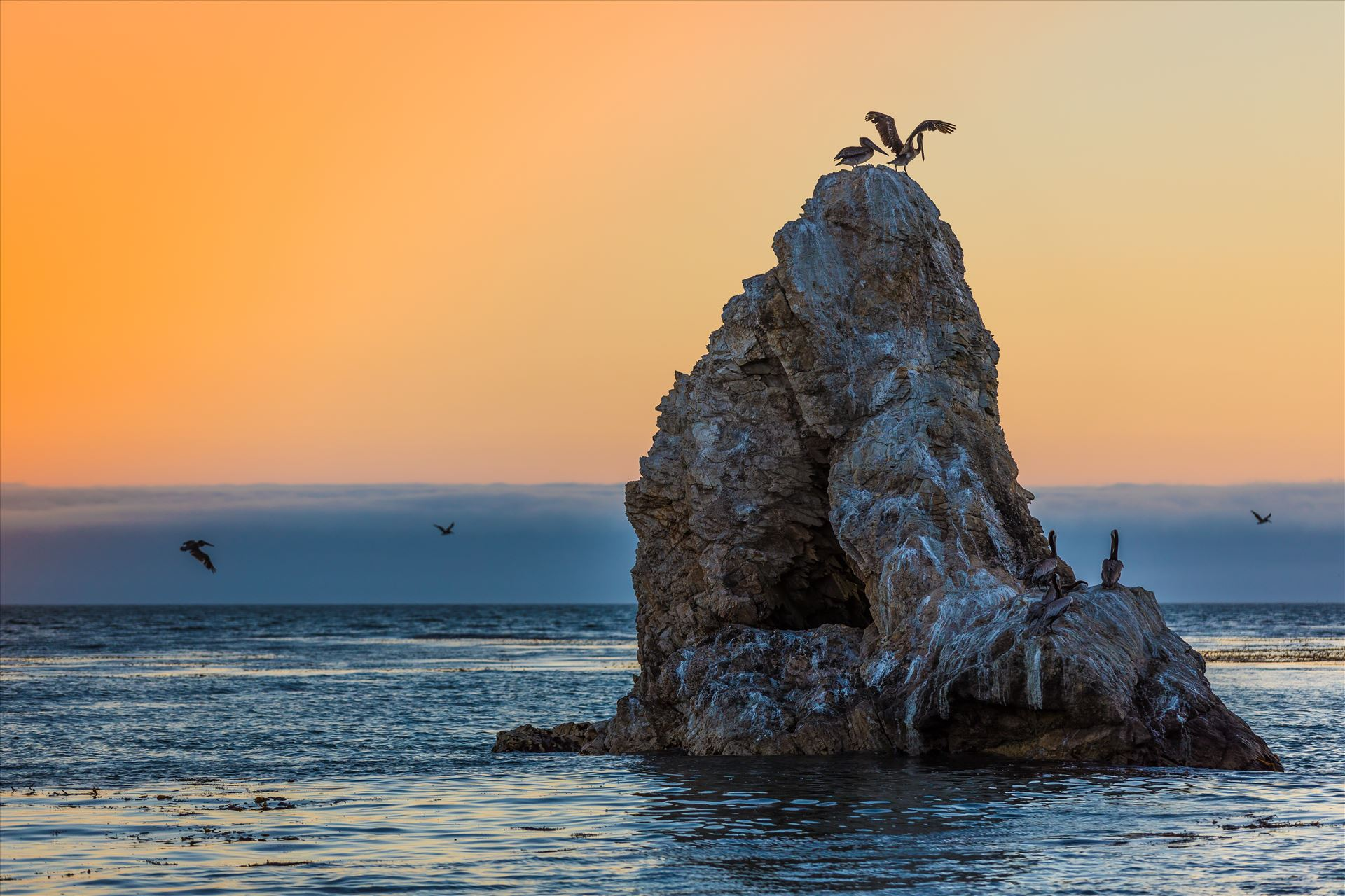 Pelican Rock - Pelicans roosting, taken from the edge of the beach Pismo Beach, California by D Scott Smith