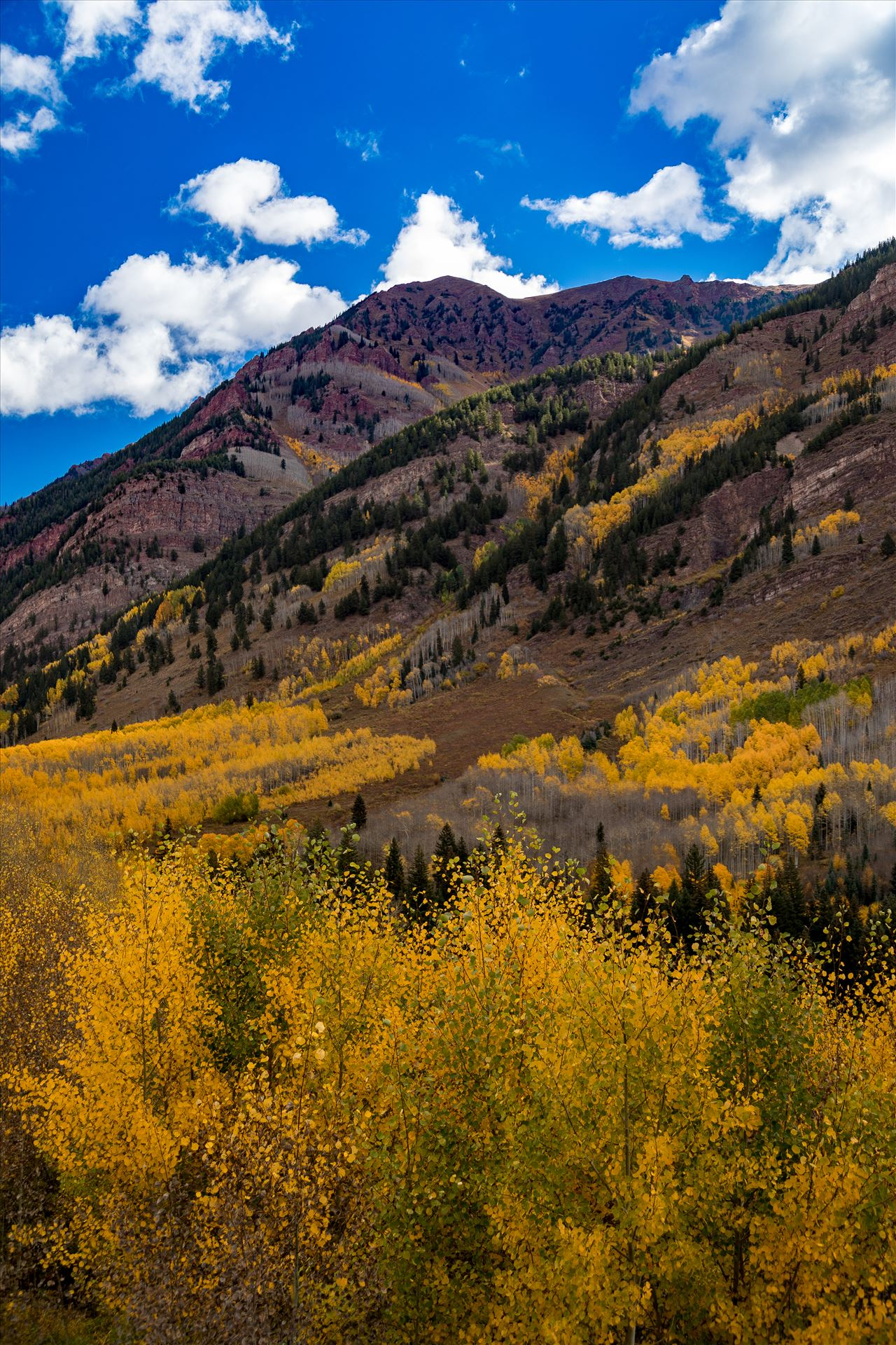 Fall in Aspen Snowmass Wilderness Area No 3 -  by D Scott Smith