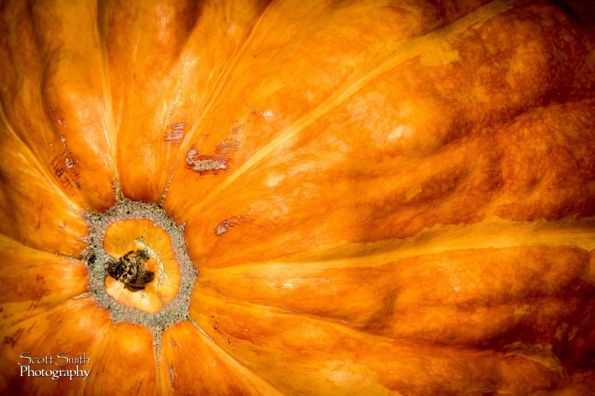 Pumpkin -  by D Scott Smith