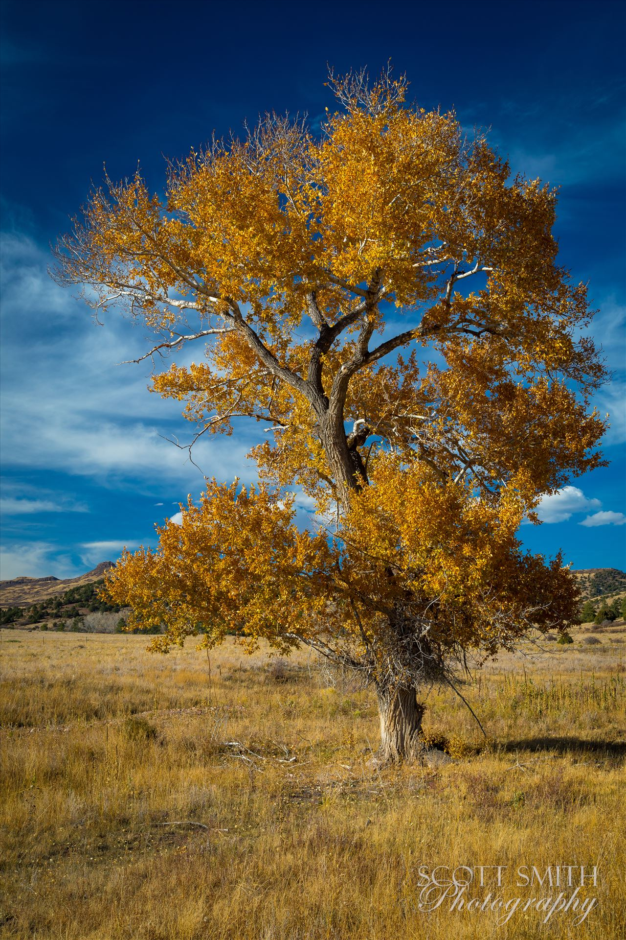 Country Tree No 2 - A lone tree in a large pasture near Guffy, Colorado. by D Scott Smith