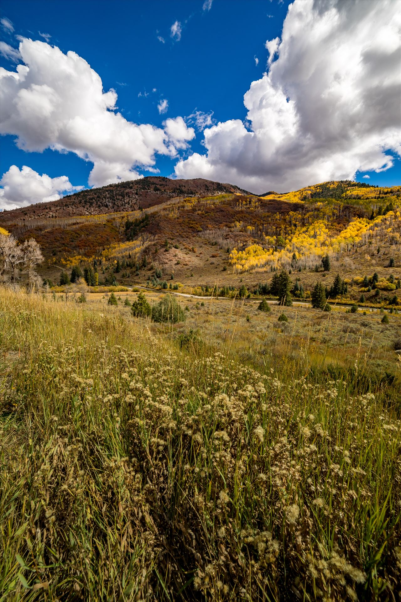Fall in Aspen Snowmass Wilderness Area No 2 - Summer grasses give way to fall colors between Redstone and Marble, Colorado. by D Scott Smith